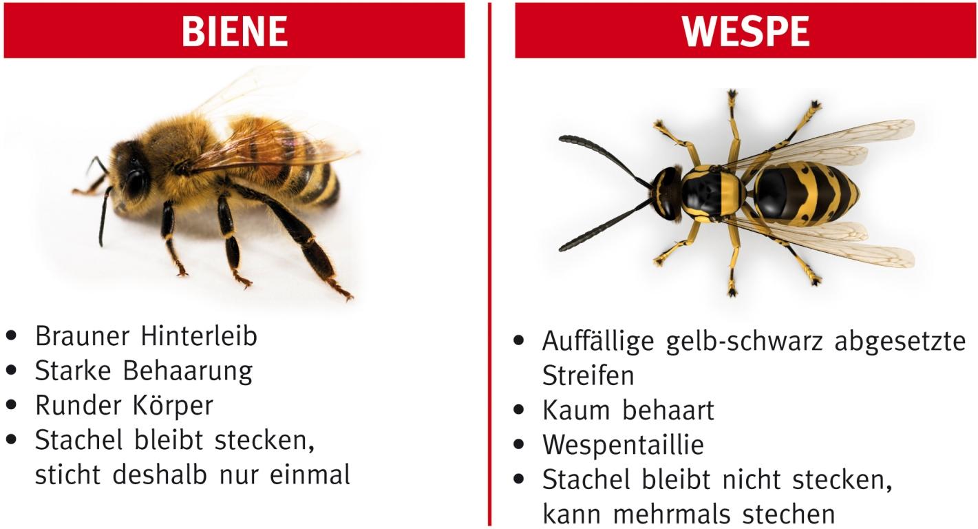 Infografik Biene Wespe by www.alk-abello.com