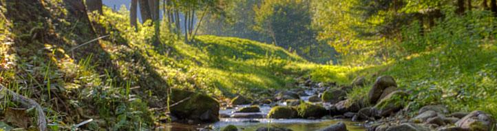 Wald am Bachlauf der Möhlin