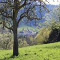 Frühling in St. Ulrich
