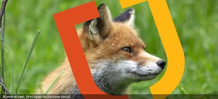 Füchse im Wohngebiet Broschüre LRA 2020 Auszug Titelfoto
